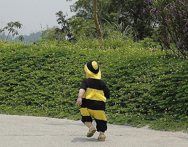 小蜜蜂-背面.jpg