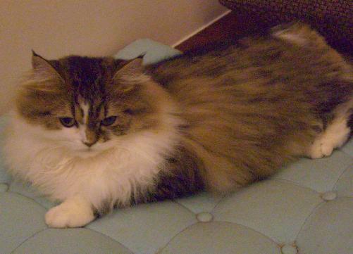cat6.png