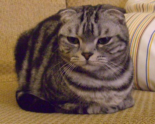 cat7.png