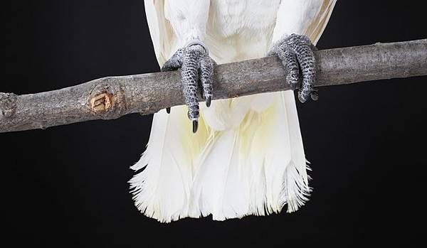 鸚鵡爪子.jpg