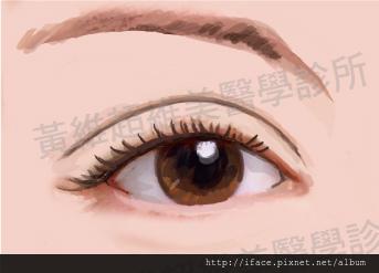 雙眼皮文章13