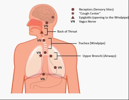 anatomy of cough sensor