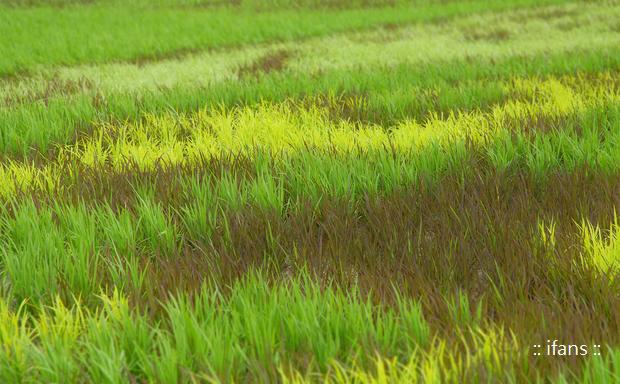 【圖二】屏東縣政府用四色彩稻葉勾勒出熊大和兔兔