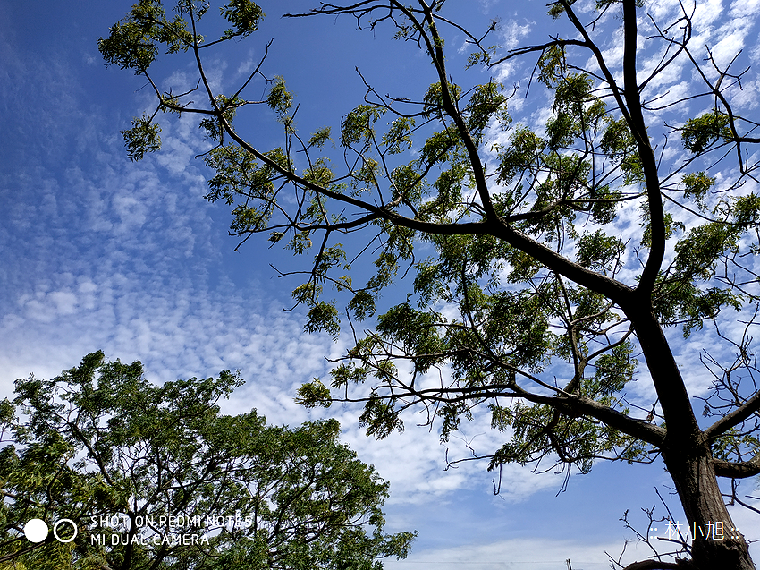 紅米 Note 5 拍照 (ifans 林小旭) (77).png