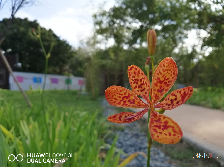 HUAWEI nova 3i 拍照 (ifans 林小旭) (19).png