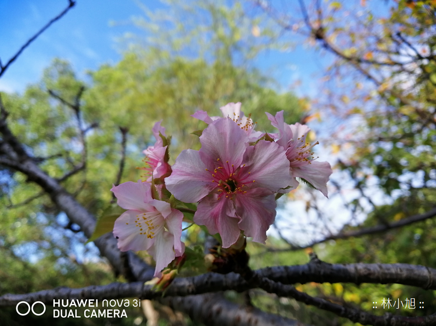 HUAWEI nova 3i 拍照 (ifans 林小旭) (18).png