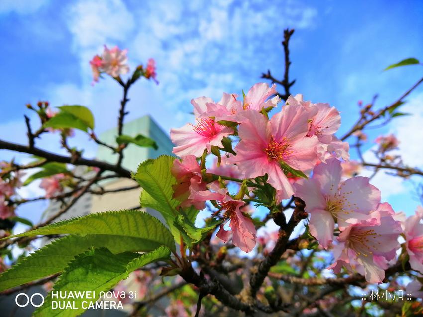 HUAWEI nova 3i 拍照 (ifans 林小旭) (24).png