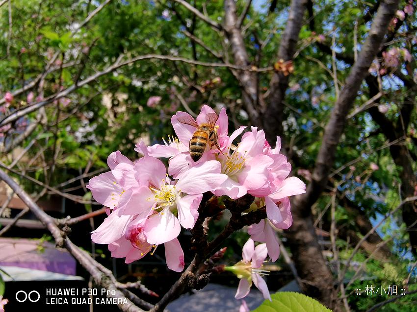 HUAWEI P30 極光版拍照 (ifans 林小旭) (129).png