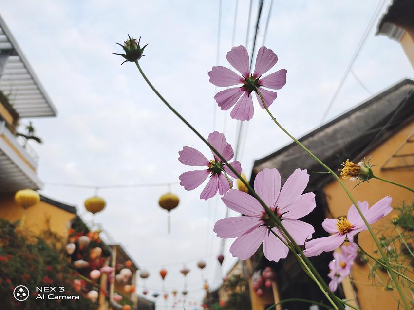 vivo NEX3 拍照 (ifans 林小旭) (147).jpg