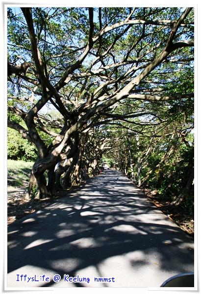 容軒園區的綠色隧道,在八斗國小附近
