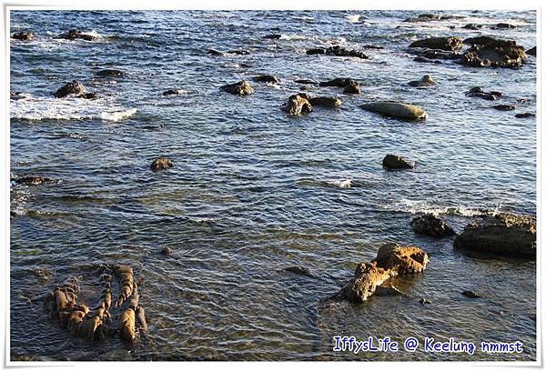 早上去的時候是漲潮,不然就可以看出明顯的岩岸地形