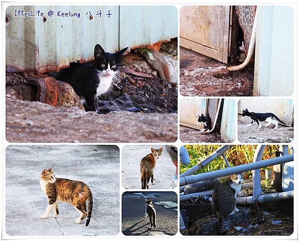 魚寮旁發現可愛的小貓,聽到快門嗶嗶聲會定格看鏡頭呢!
