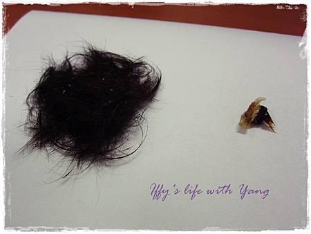 臍帶和胎毛.JPG