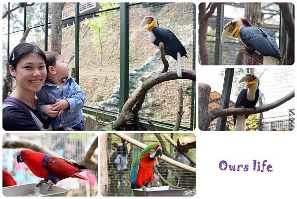森林鳥花園 (15).jpg