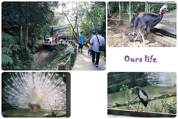 森林鳥花園 (16).jpg