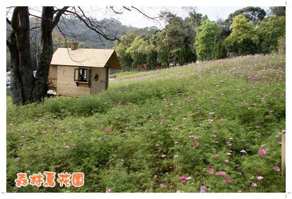 森林鳥花園 (33).JPG