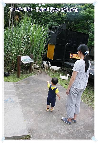 Taipei Zoo (5).JPG