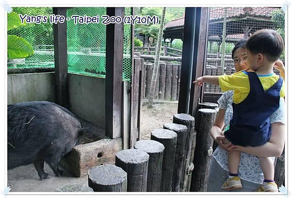Taipei Zoo (6).JPG