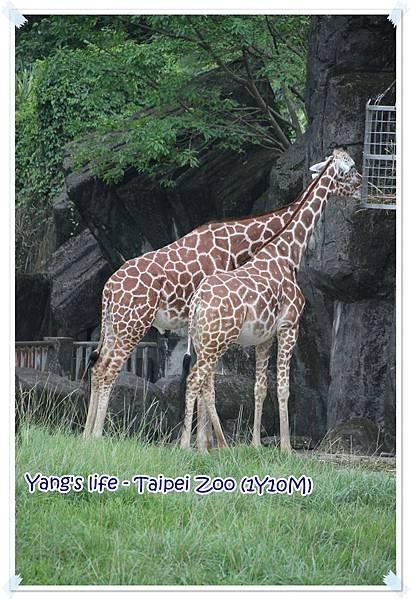 Taipei Zoo (12).JPG