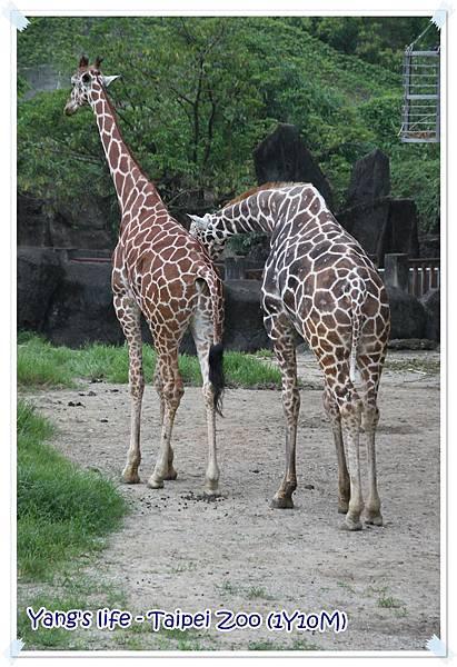 Taipei Zoo (13).JPG