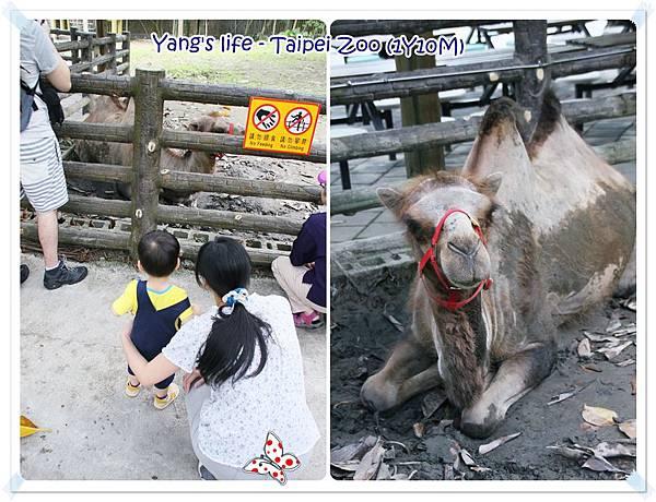 Taipei Zoo (14).jpg