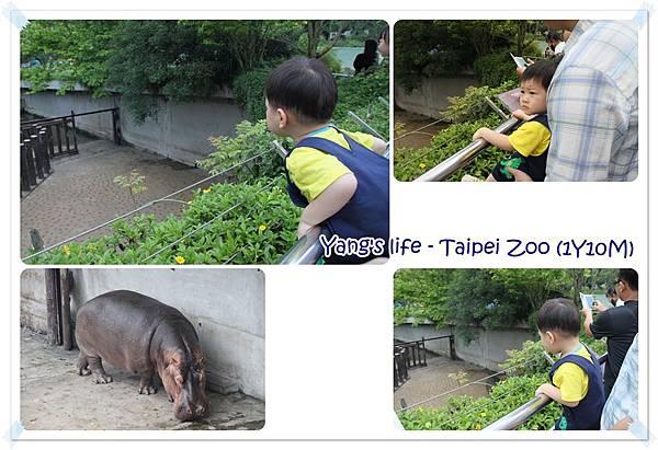 Taipei Zoo (15).jpg