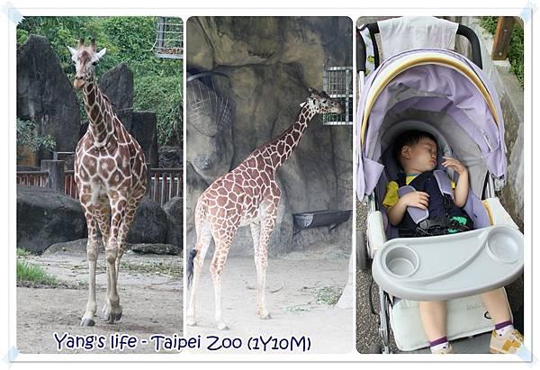 Taipei Zoo (16).jpg