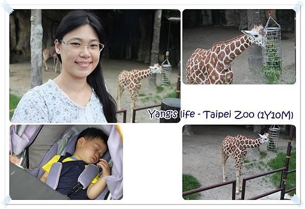 Taipei Zoo (17).jpg