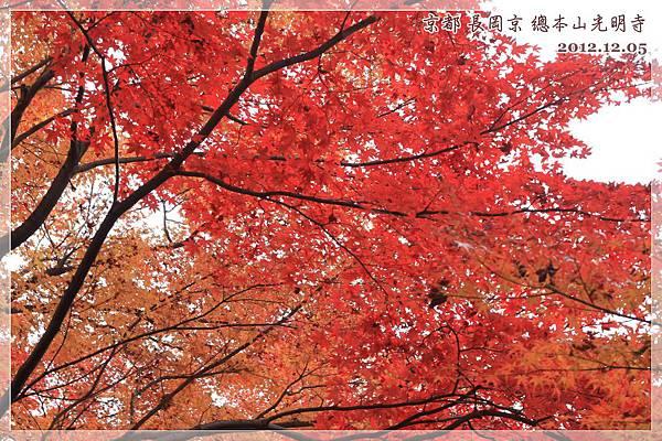 京都長岡京總本山光明市 (15).JPG