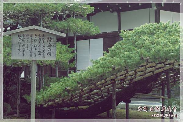 金閣寺 (5).JPG