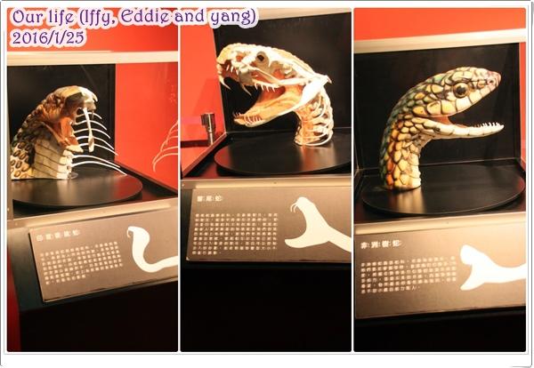 台中世貿恐龍展 (6).jpg