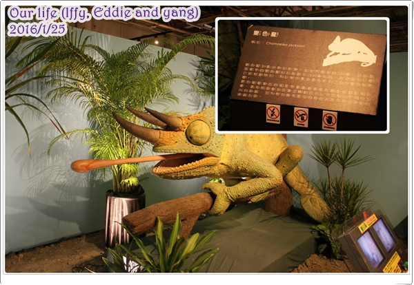台中世貿恐龍展 (8).jpg