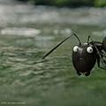 昆蟲LIVE秀電影版 (8).jpg