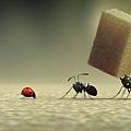 昆蟲LIVE秀電影版.jpg