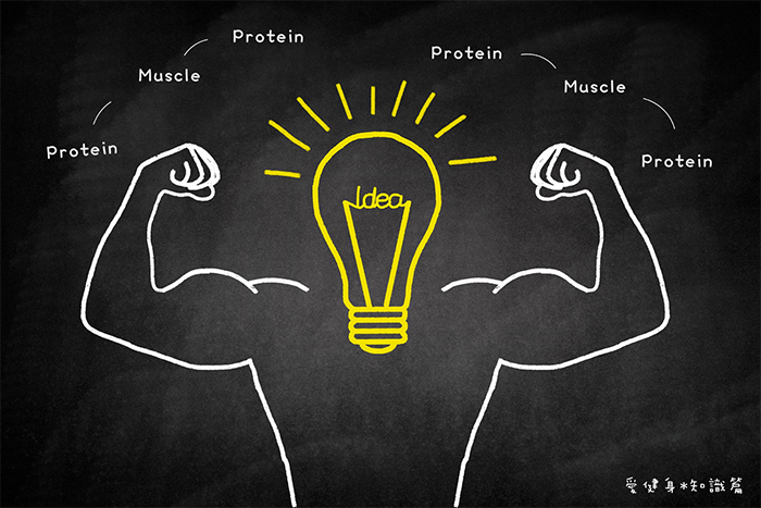 肌肉圖+浮水印.png