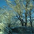 さっぽろ雪櫃 (78).JPG