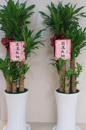 常用盆栽-06.jpg