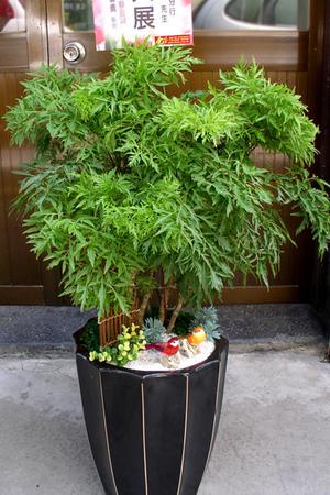 常用盆栽-04.jpg