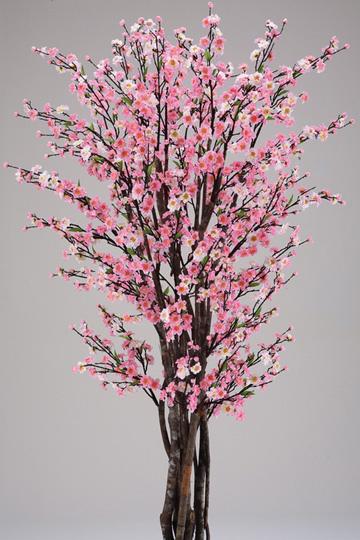 真幹櫻花樹-粉紅.jpg