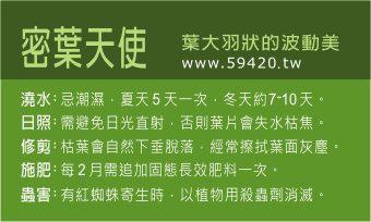 觀葉植物養護 (1).jpg