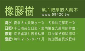觀葉植物養護 (4).jpg