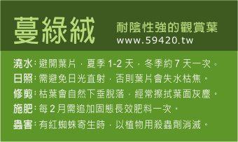 觀葉植物養護 (2).jpg
