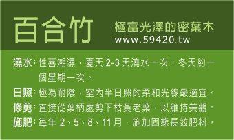 觀葉植物養護 (6).jpg