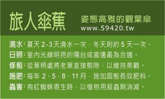 觀葉植物養護 (11).jpg