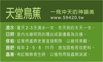 觀葉植物養護 (12).jpg