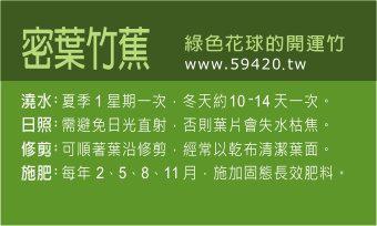 觀葉植物養護 (9).jpg