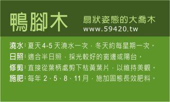 觀葉植物養護 (8).jpg