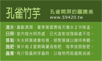 觀葉植物養護 (15).jpg