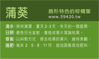 觀葉植物養護 (18).jpg
