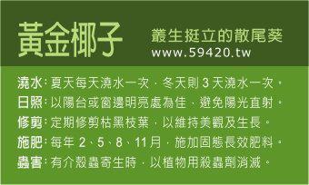 觀葉植物養護 (13).jpg